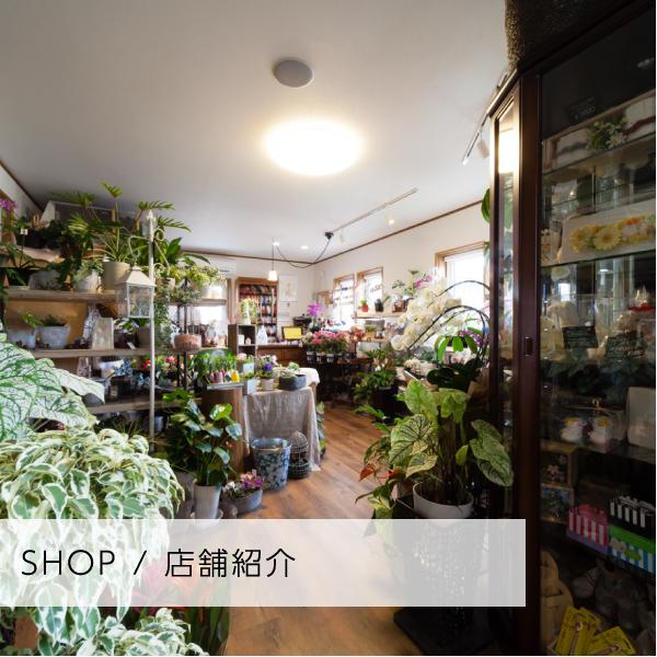 SHOP / 店舗紹介
